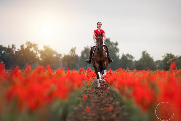 Op een mooie zomeravond, te paard…